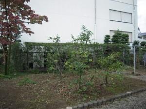 DSCN5683