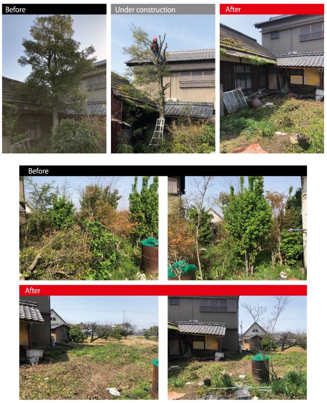 浅野樹木伐採